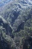 久慈川対岸から望む夢想滝渓谷