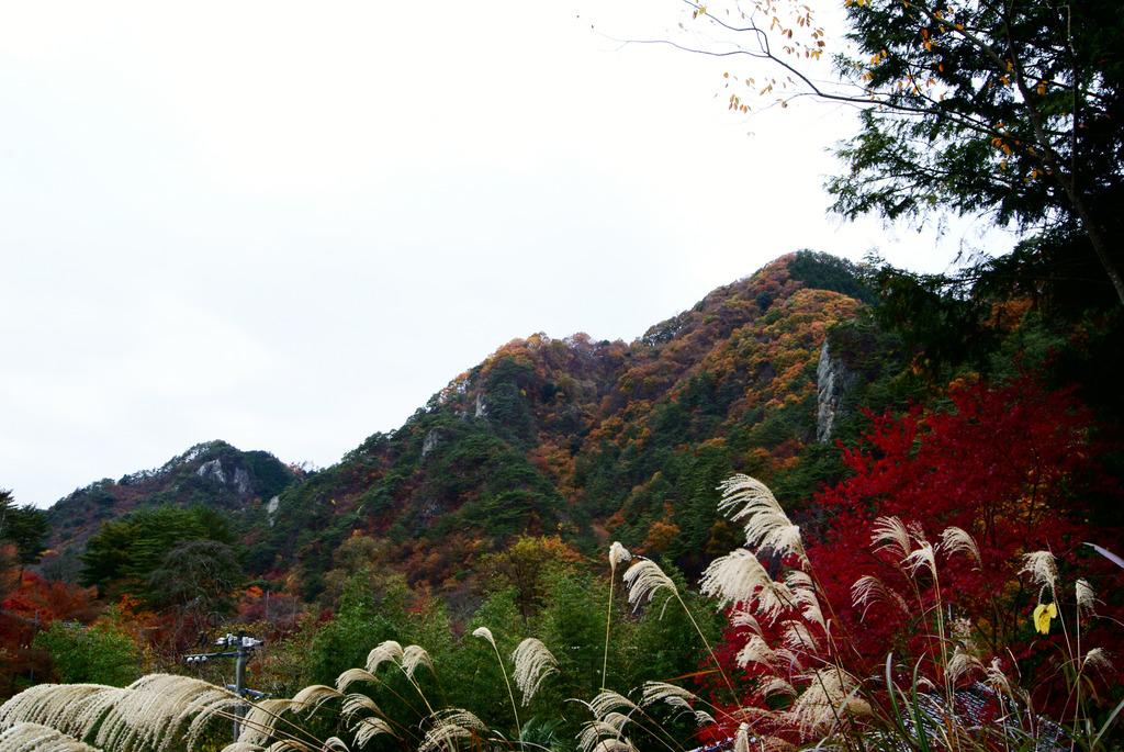 トンネル抜けて矢祭山の紅葉