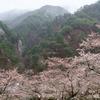 矢祭山公園の桜と雨に咽ぶ桧山