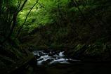 大風川渓谷の木道