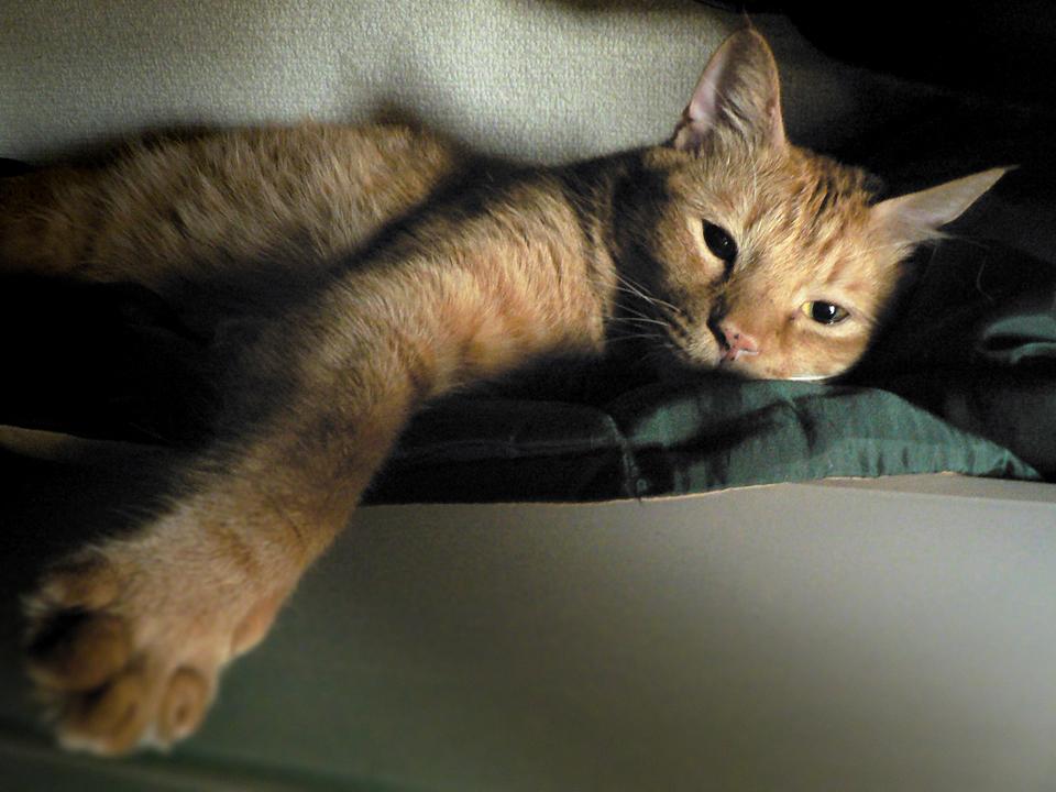 クローゼットで寝ていたトラ