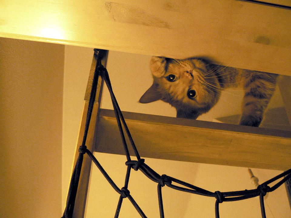 猫缶の気配・・・トラ