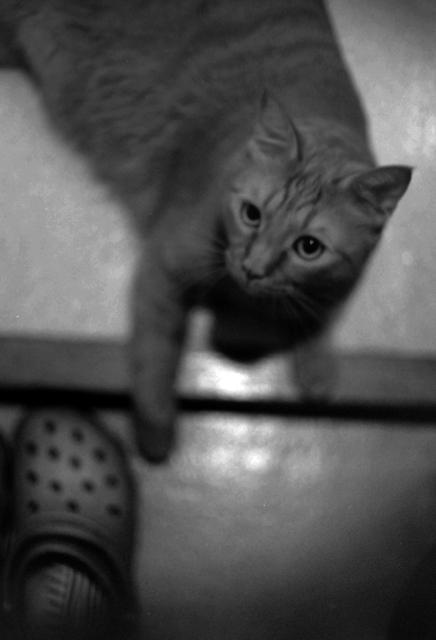 おかえり〜と トラ
