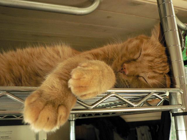頭を鉄棒で冷却中〜 トラ