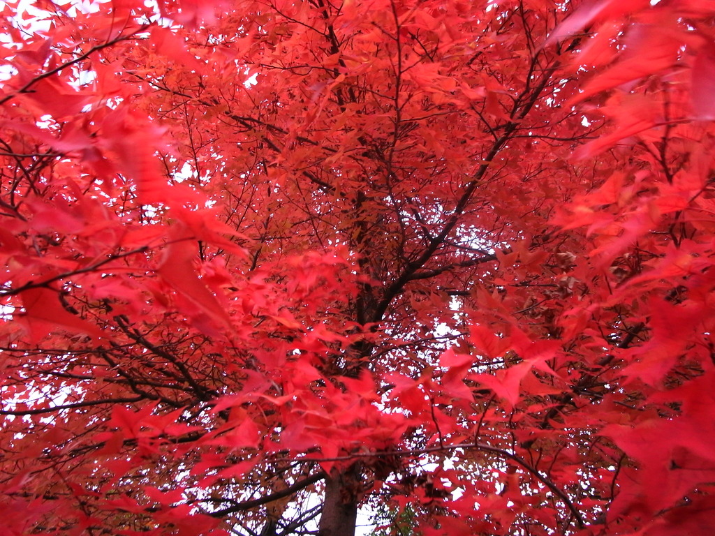 風に揺れる赤