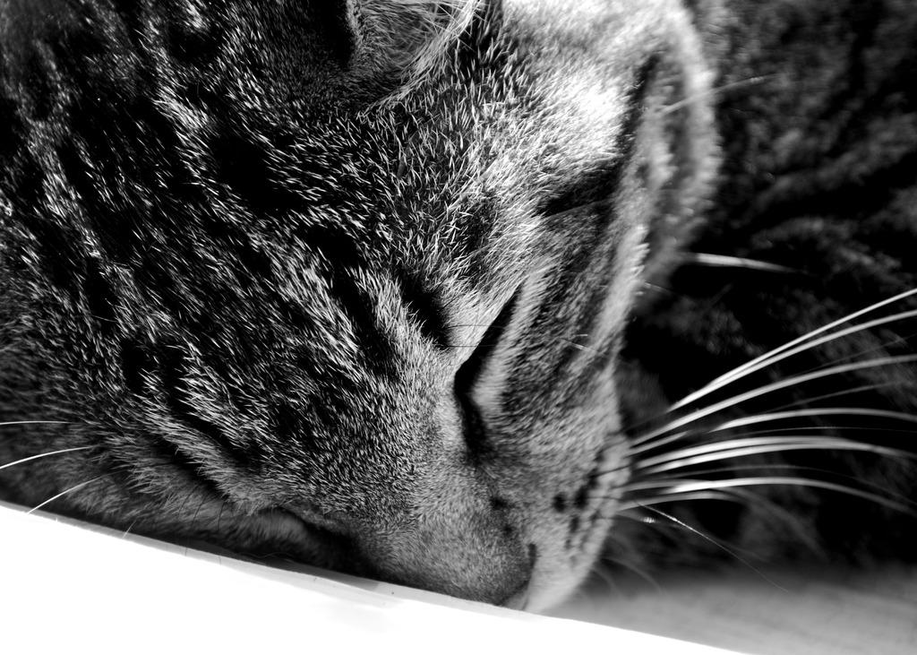 She is sleeping.