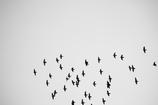 鳥 点_02