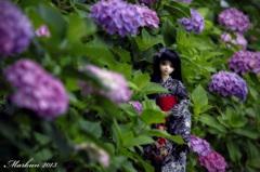 雨上がりの紫陽花と浴衣姿の少女