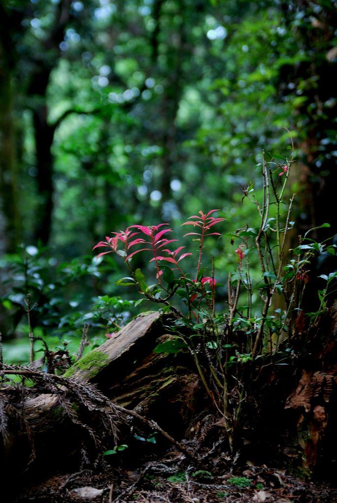 野に咲く赤い葉。