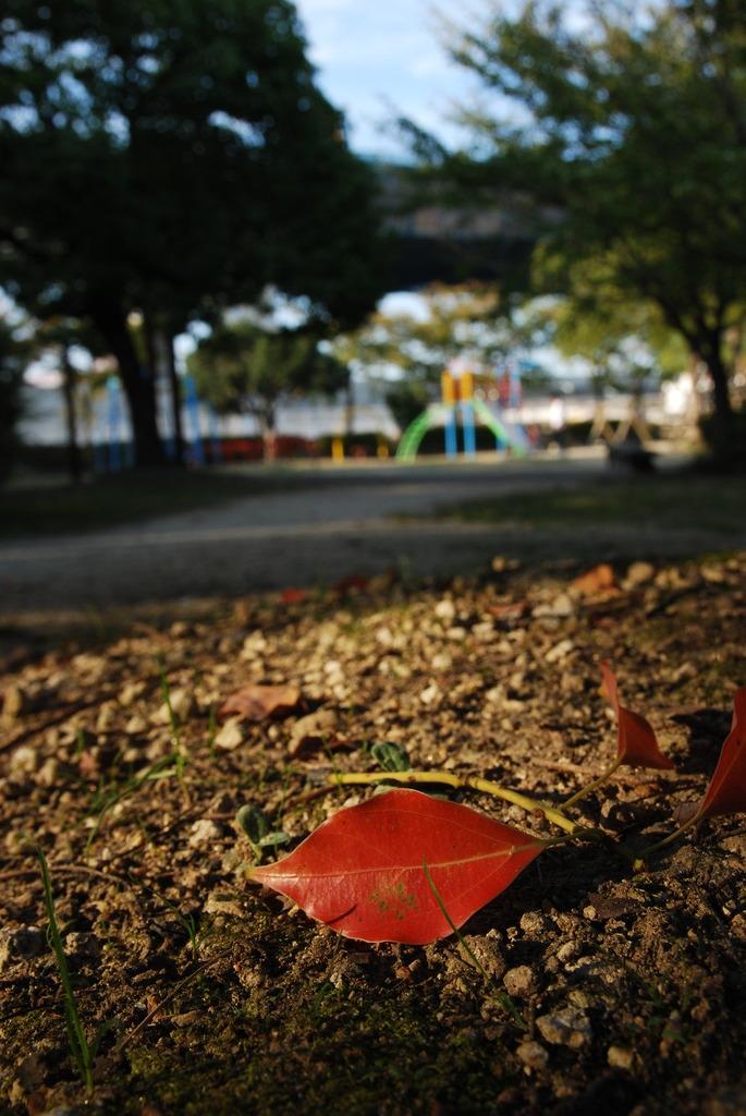 秋の訪れ。