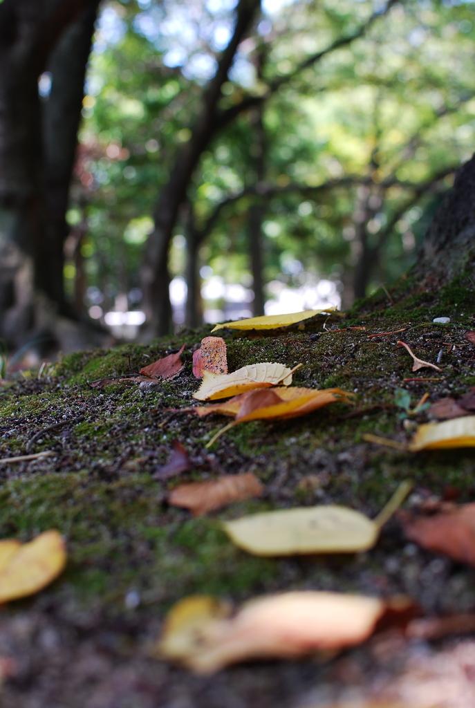 落葉と緑。