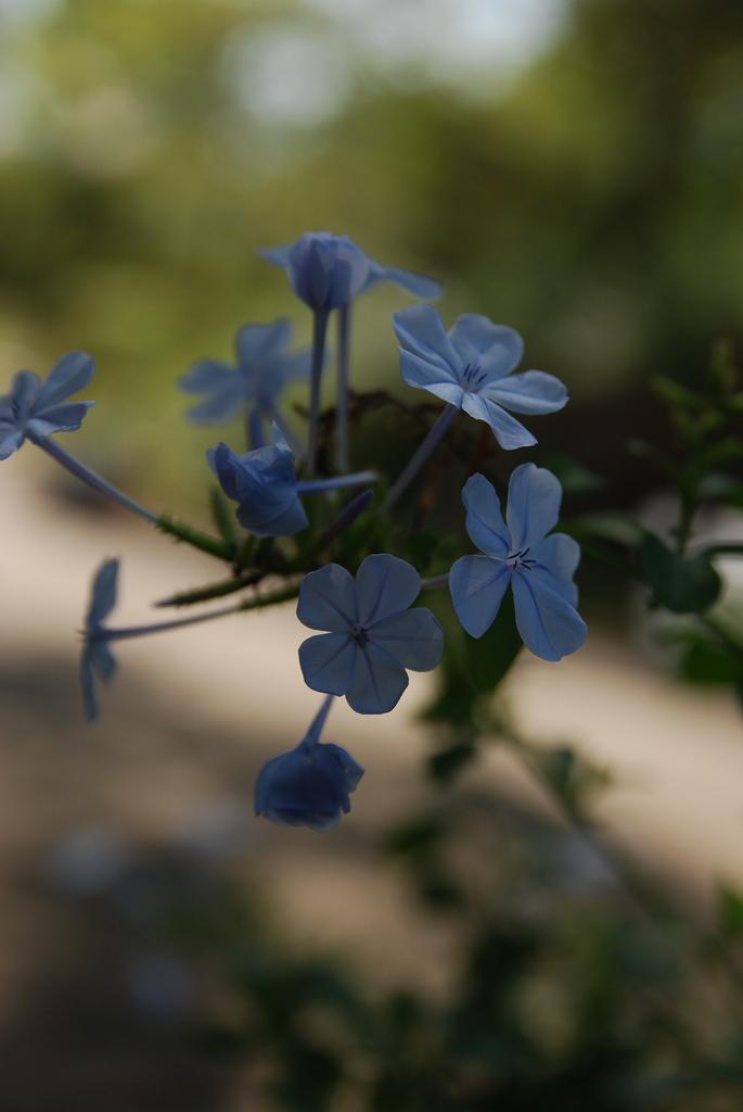 小さい花。