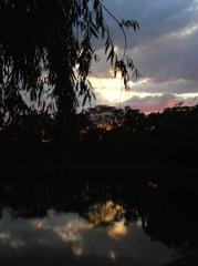 奈良公園の夕暮れ