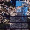 青い空と桜と窓