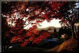 晩秋の里2