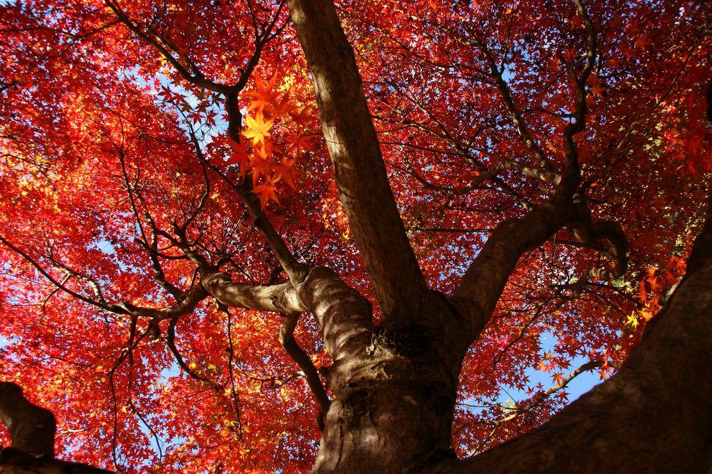 パワフルな秋