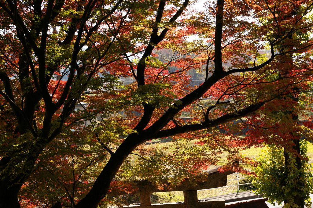 岩村武並神社の錦秋1