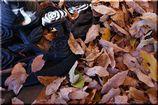 足元に積もる秋