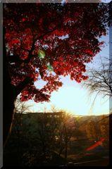 暮れなずむ紅葉