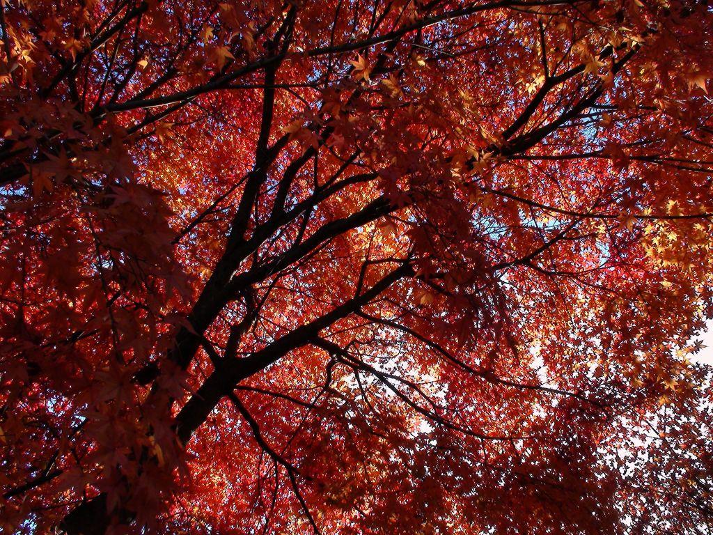恵那峡の秋3