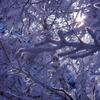 白銀の木漏れ日