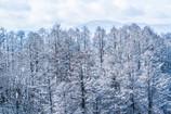 凍れる旋律