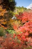 scrambled color leaves