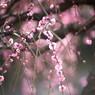 梅と光のコンチェルト