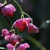 戸隠高原 花の名前は「マユミ」