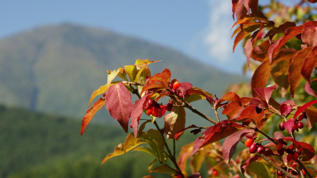 飯綱高原の秋