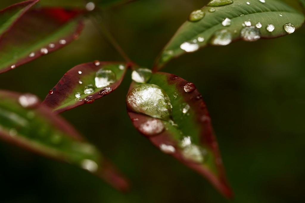 水玉に写った秋