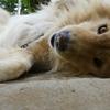 ライオンが寝ているのではありません