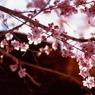 CANON Eos-1VHSで撮影した植物(異次元の扉)の写真(画像)
