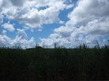 さとうきび畑と空