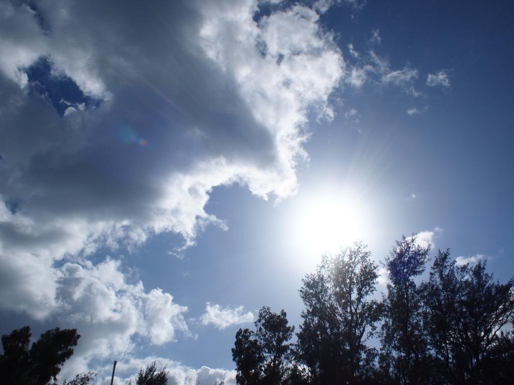 夏の陽射し