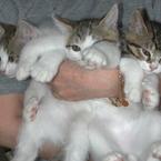 NIKON E990で撮影した動物(選べなかった猫)の写真(画像)