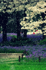 粉雪のように舞い落ちる花弁