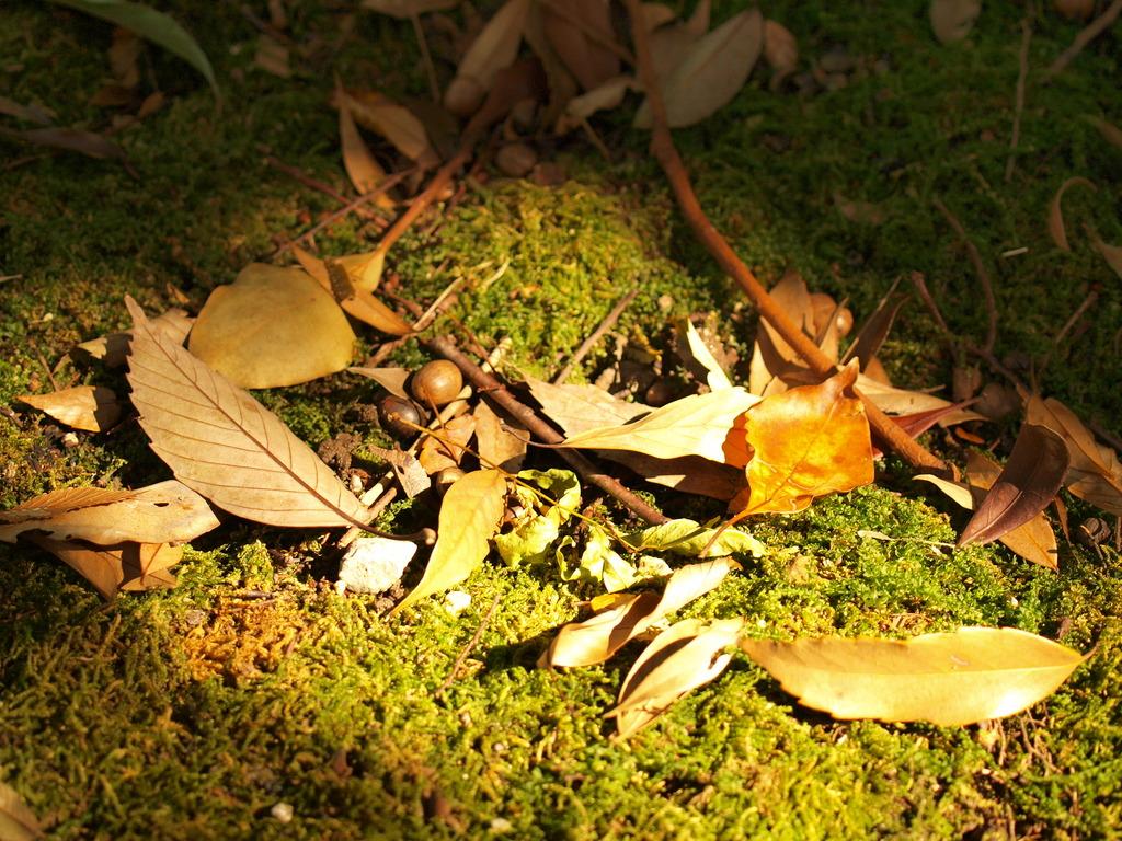 落ち葉とどんぐり