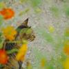 花と猫おじさん