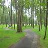 SONY DSC-P10で撮影した風景(北海道/ニドム)の写真(画像)