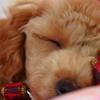 あさりちゃんの寝顔 2
