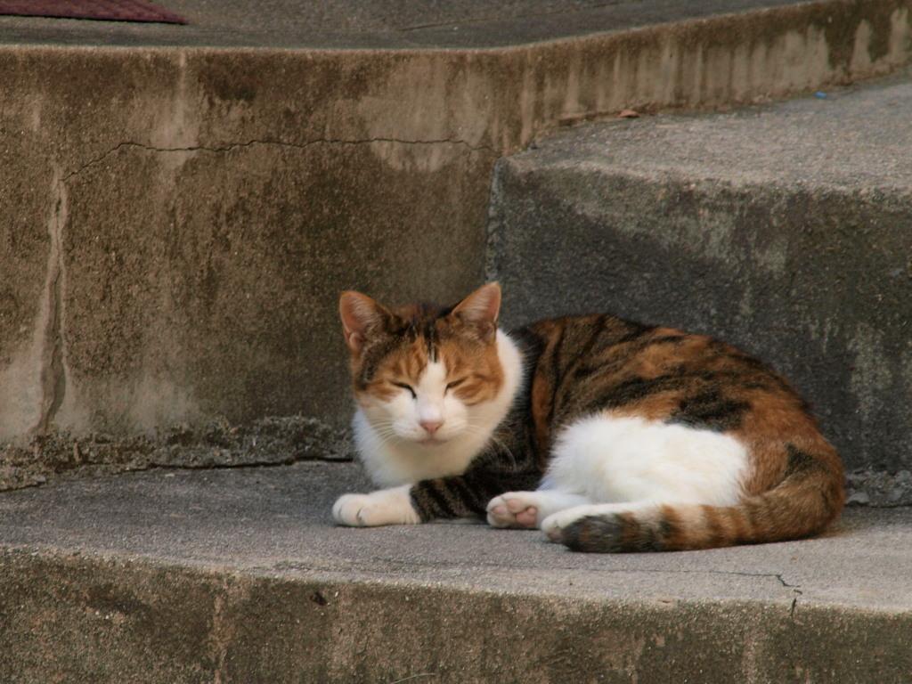 近所の猫にいつもにらまれてます