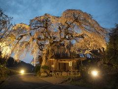 ライトアップ  奈良・西光寺