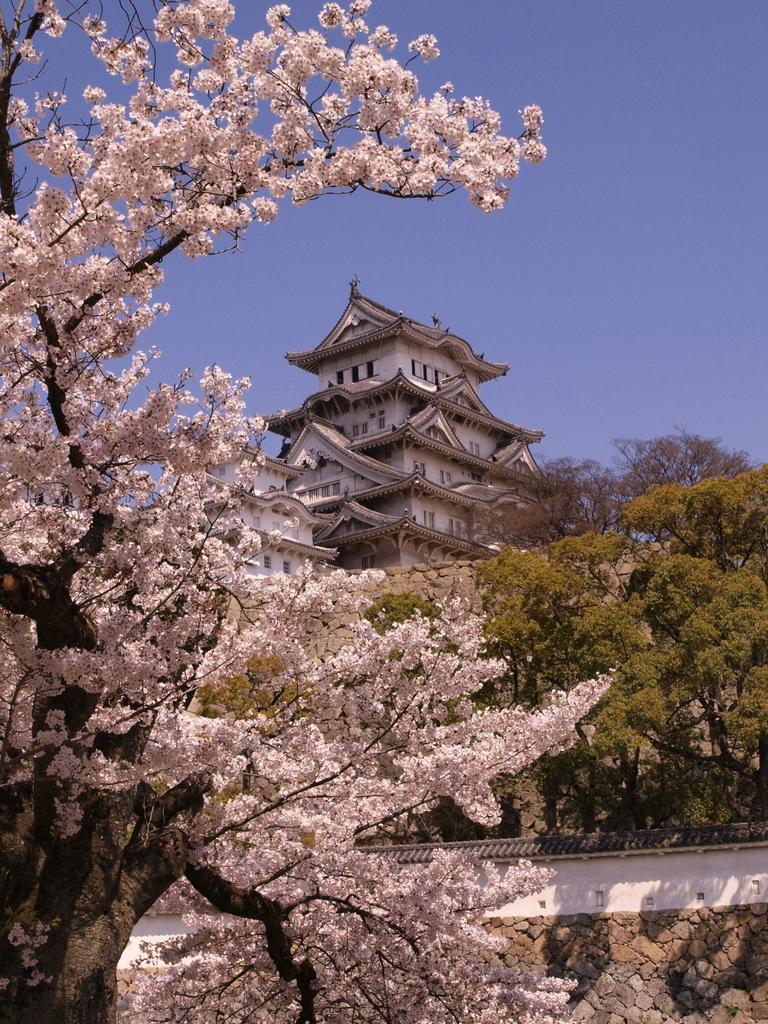 姫路城  桜満開