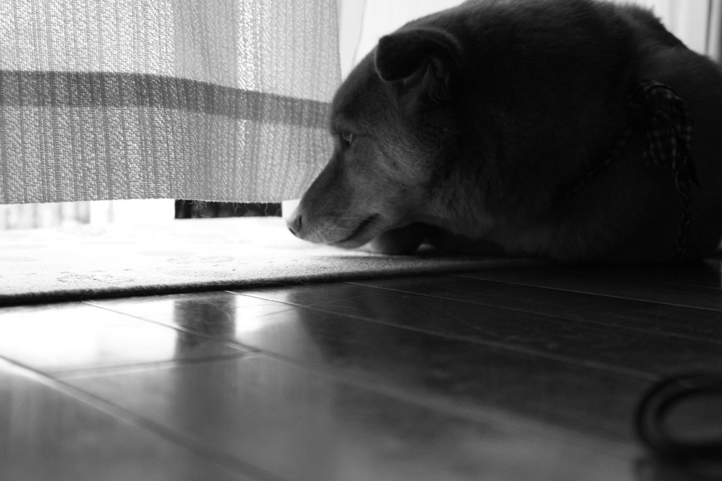 う~む…気になる、窓の外