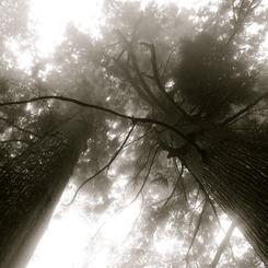 NIKON NIKON D40で撮影した植物(ただ、そこにいる)の写真(画像)