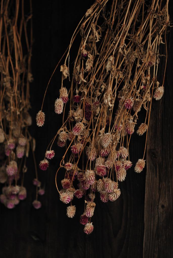 軒下に咲く花