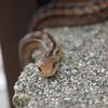 庭に現れたヘビくん