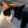 テケトミノラ(?)ネコ