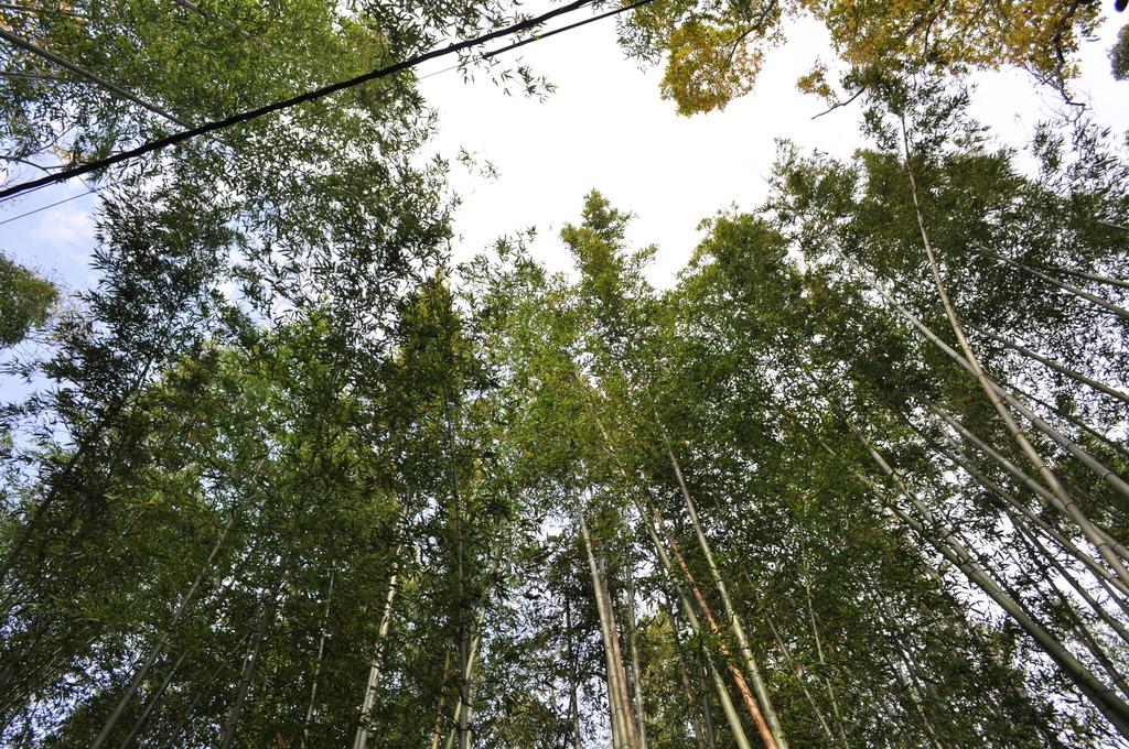 長ーーい竹